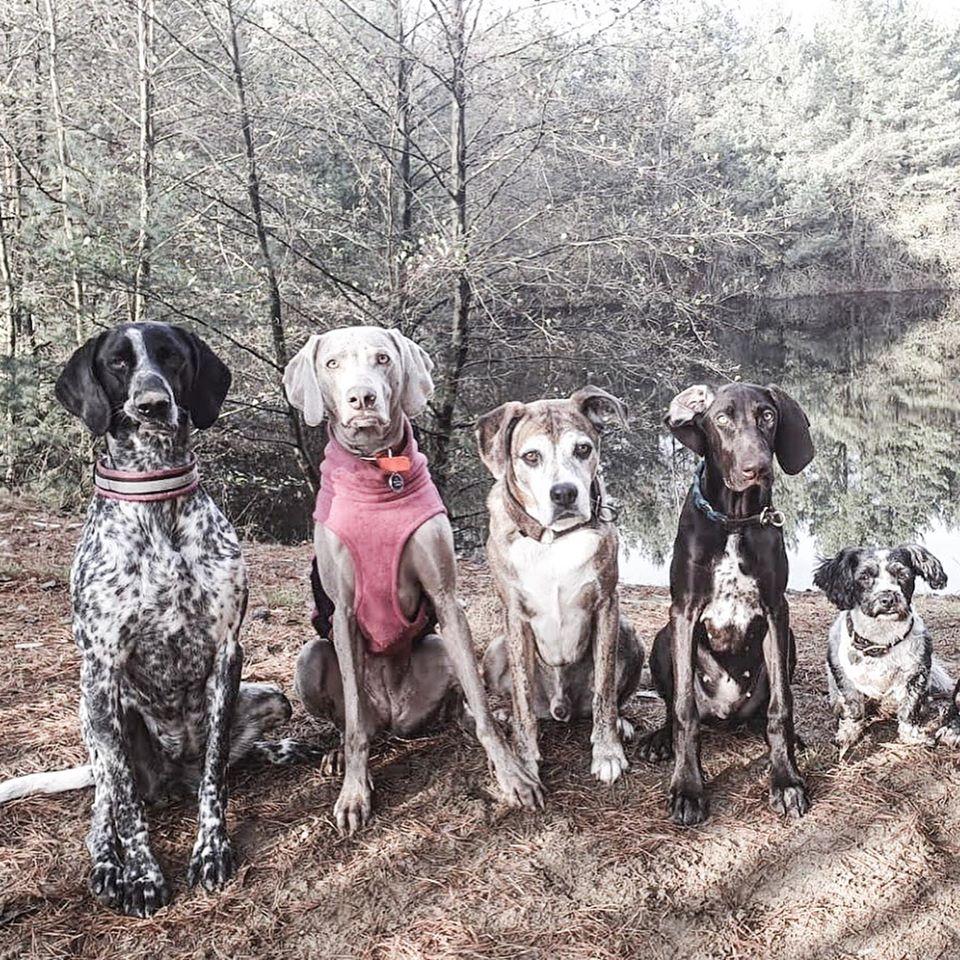 Los deportistas de Mushing y los veterinarios, siempre unidos por el bienestar y la seguridad